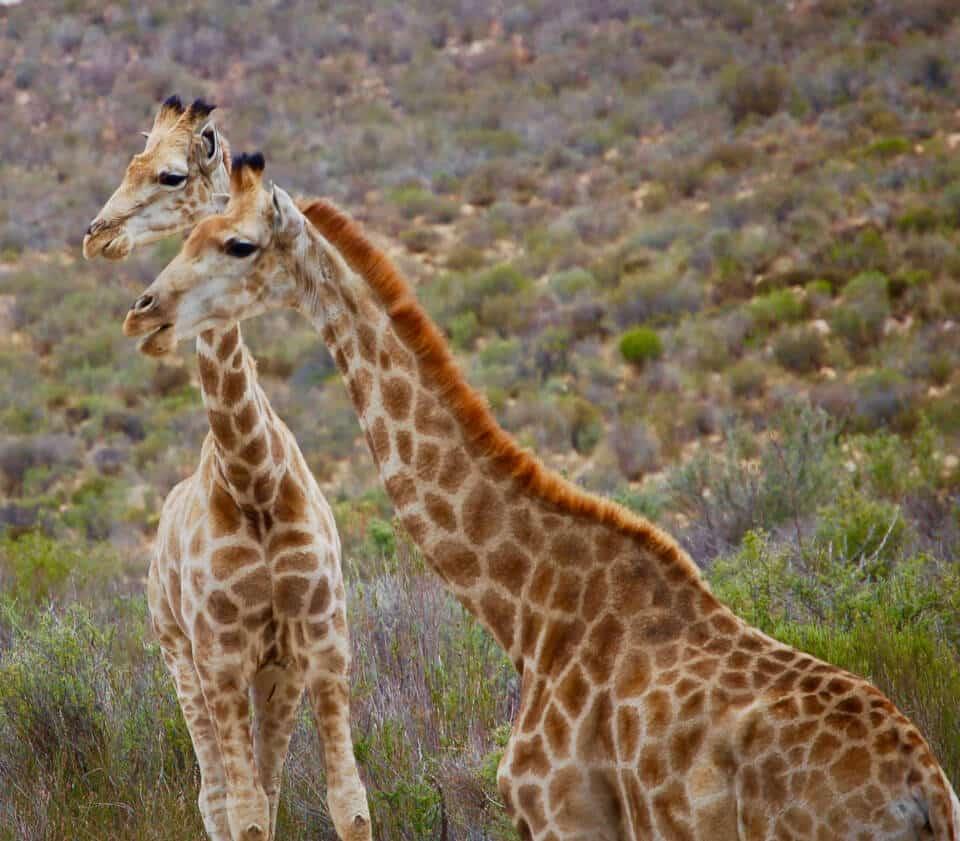 Safarin in South-Africa