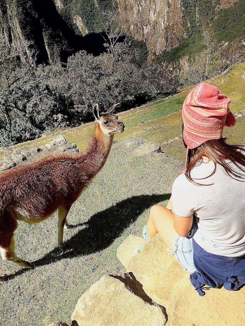 Lama - Machu Picchu