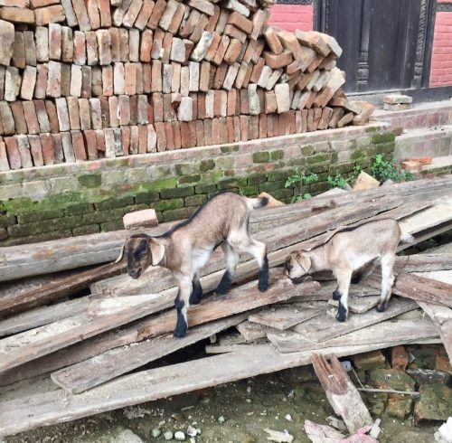 Bungamati i Nepal_1533