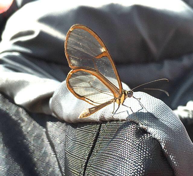 Iguazu falls - sommerfugl