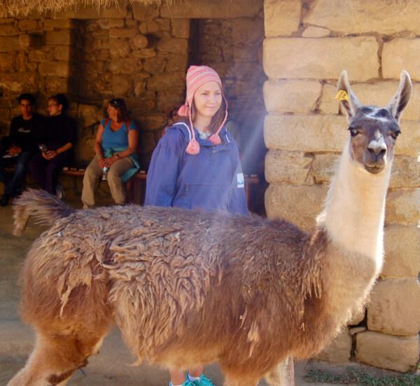 Machu Picchu - lama