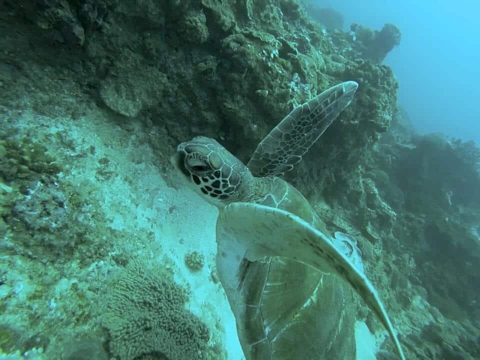 Marine Reef and Conservation - dykking  med havskilpadder