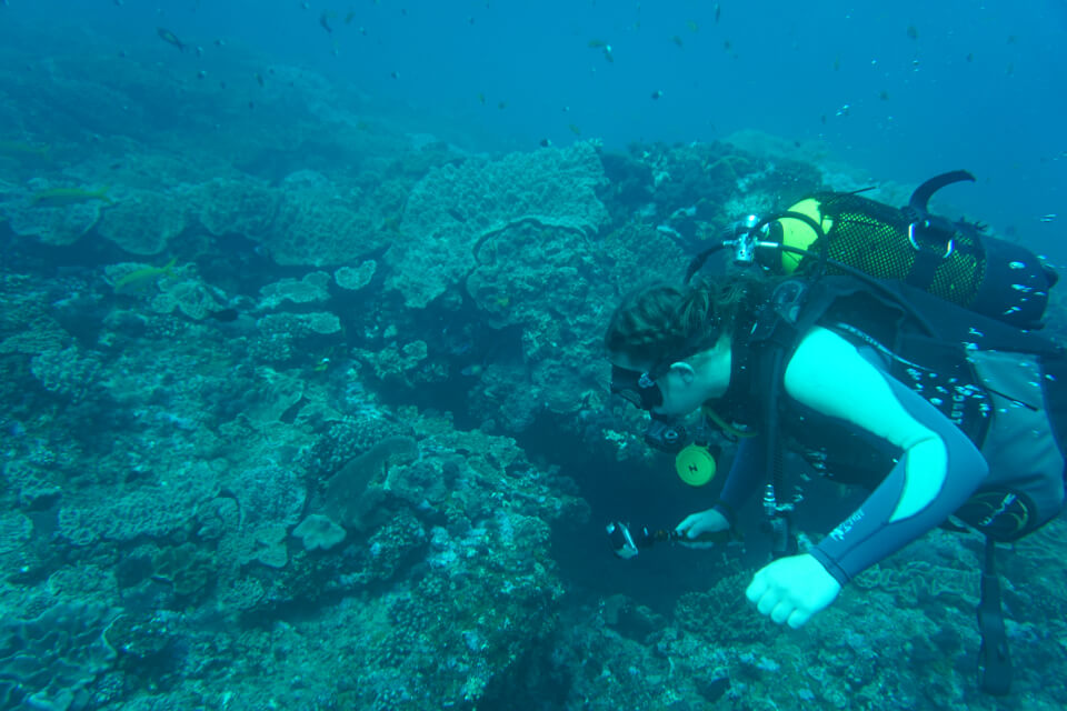 Marine Reef and Conservation - dykking