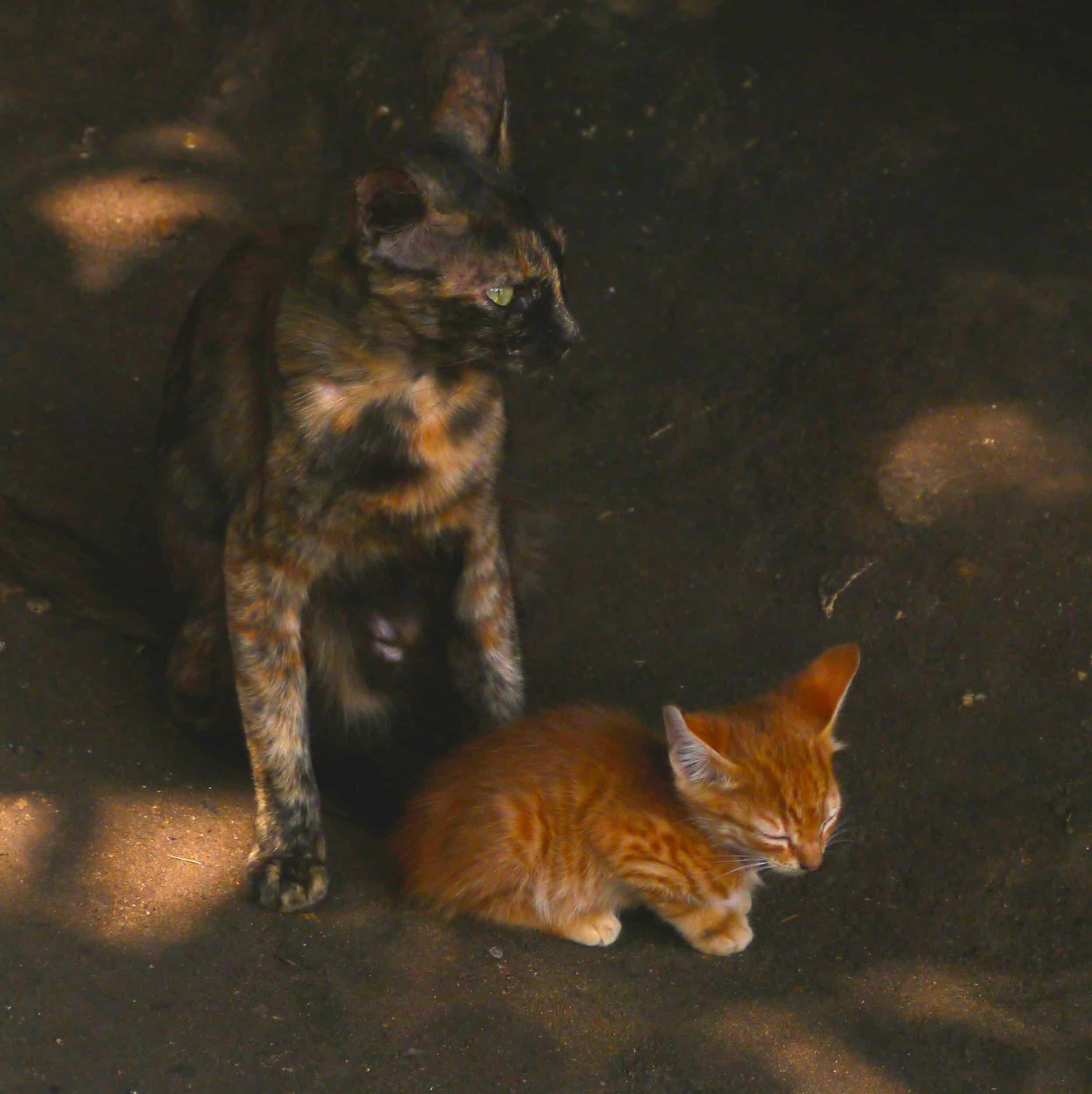 Katter i Stone Town