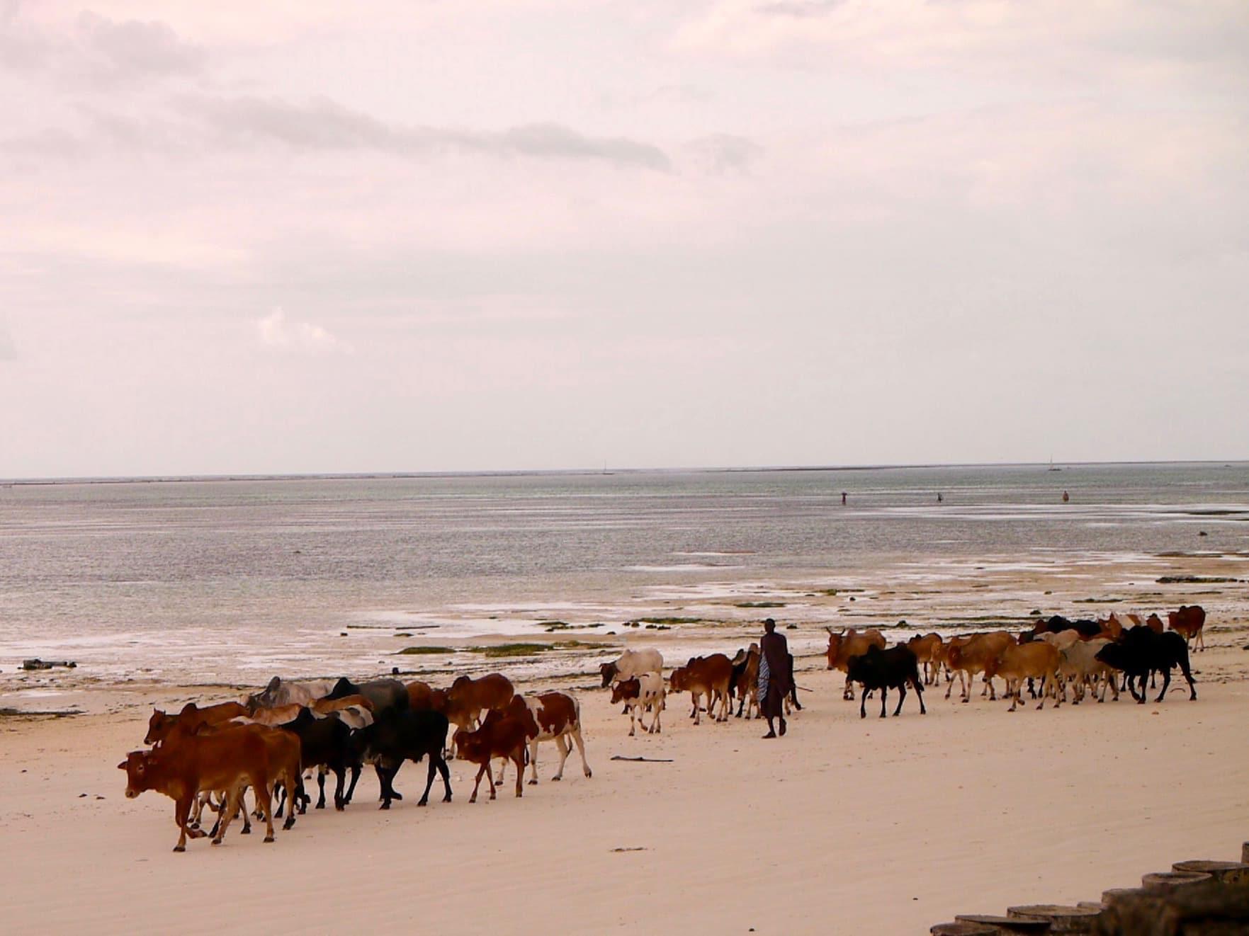 Stranden utenfor Sultan Sands, Zanzibar